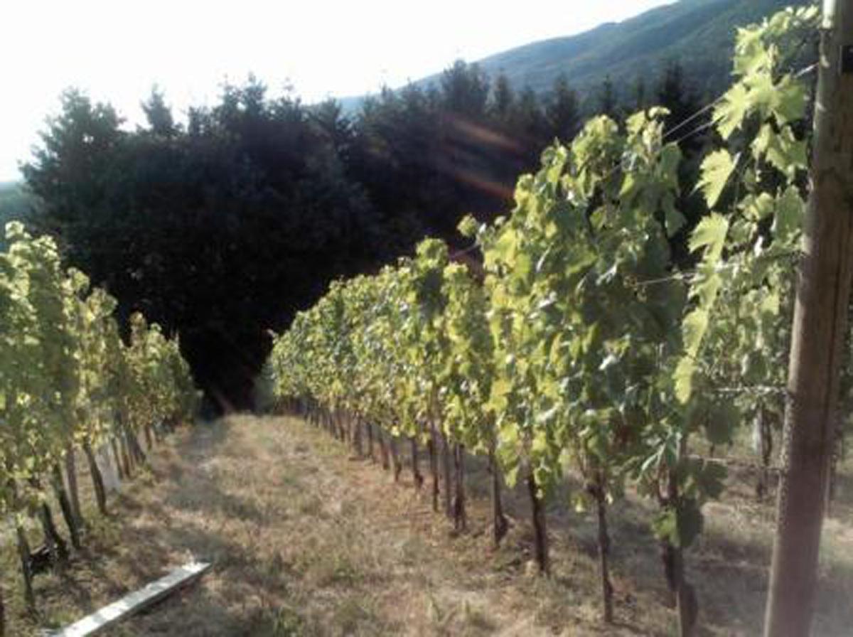 Pogled na vinograd