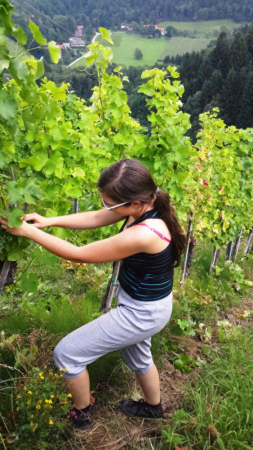Ogled vinograda