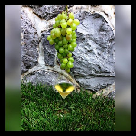 Iz grozdja v vino