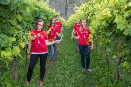 Čakamo na prve kapljice vina (foto: Veronika Kravos)