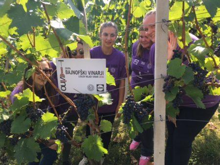 Med sočnim grozdjem v našem vinogradu